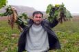 Yozgat'ta 800 ton şeker pancarı tarlada kaldı