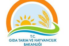 Tarım Bakanlığı müsteşar yardımcılığı kadrosu arttı