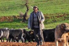 Atanamayan öğretmen hikayesi şimdi çobanlık yapıyor