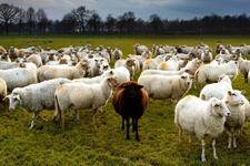 Türkiye'de hayvancılık sektörü bitiyor mu?