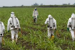 Bitki koruma ürünleri ithalatına düzenleme Resmi Gazete'de yayımlandı