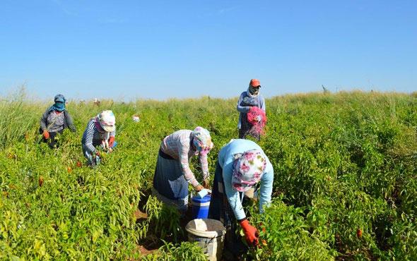 Tarım işçilerine ödenen ücretler açıklandı