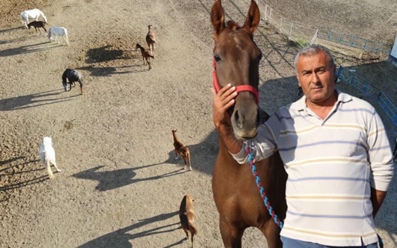Bu atların fiyatları dudak uçuklattı! Servet değerinde! Duyan inanamadı...