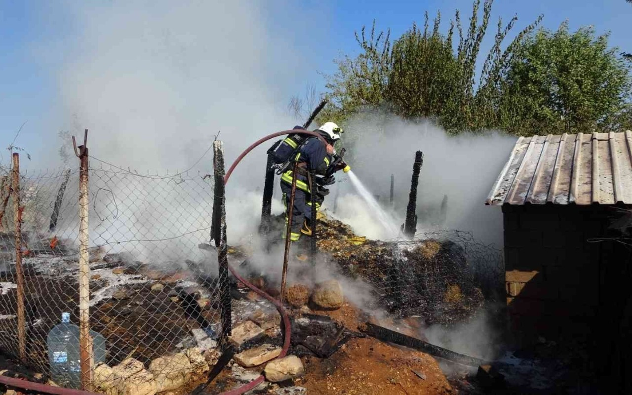 Antalya'da saman dolu ağılda yangın: 15 koyun telef oldu